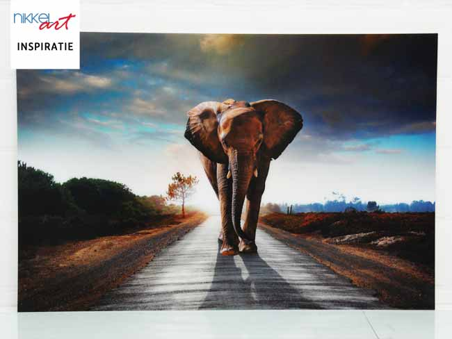 Photo sur Plexiglas ANTI REFLET Elephant
