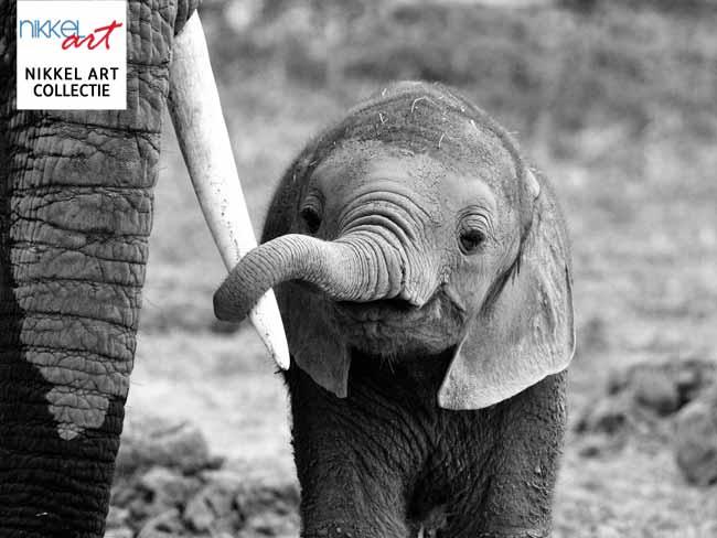 nikkelart collectie elephant