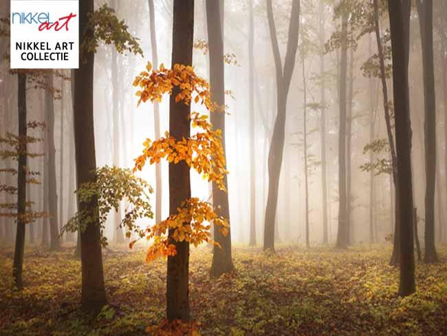 nikkelart collectie mist in het bos