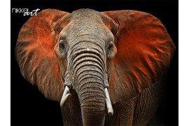 Prachtige Afrikaanse olifanten in Tsavo Park in Kenia