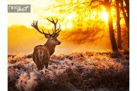 Herten in zonsondergang in het bos