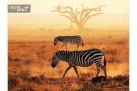 Plains Zebra s lopen op stoffige vlaktes