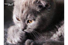 Kitten liegen