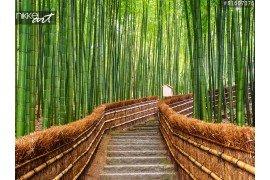 Fotorolgordijnen Bamboe