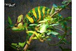 Poster Kameleon
