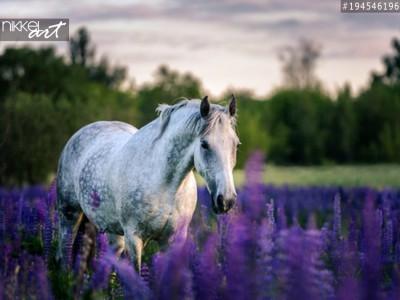 Foto op Aluminium Paarden
