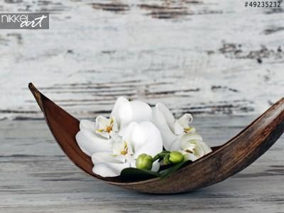 Mooie orchideebloem