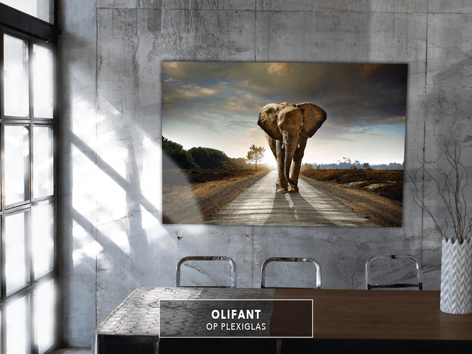 Olifant op Plexiglas