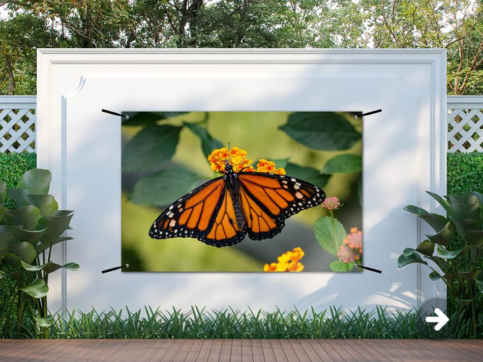 Tuinposter Vlinder