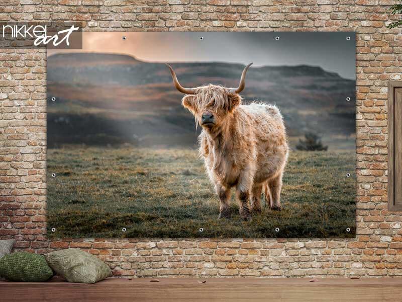 Tuinposter Highland koe