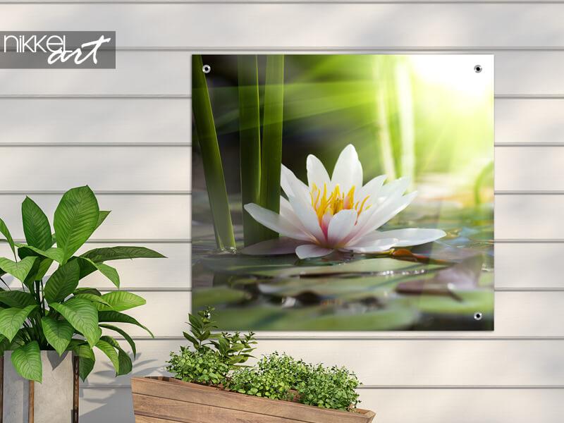 Tuinposter lotusbloem