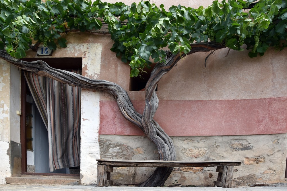 Old grapevine, door and a bench