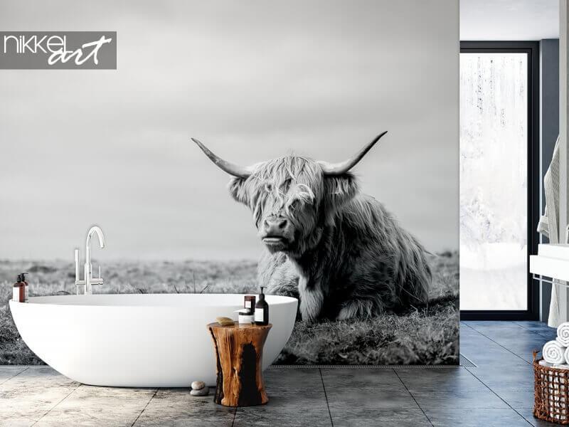 Eyecatcher van formaat: Schotse hooglander op fotobehang