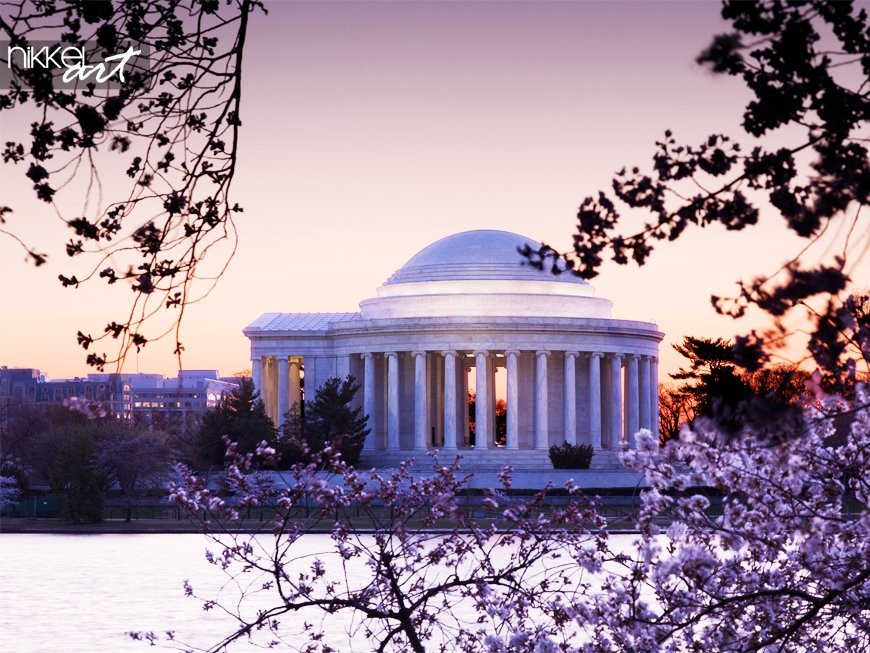 Kersenbloesem en jefferson memorial