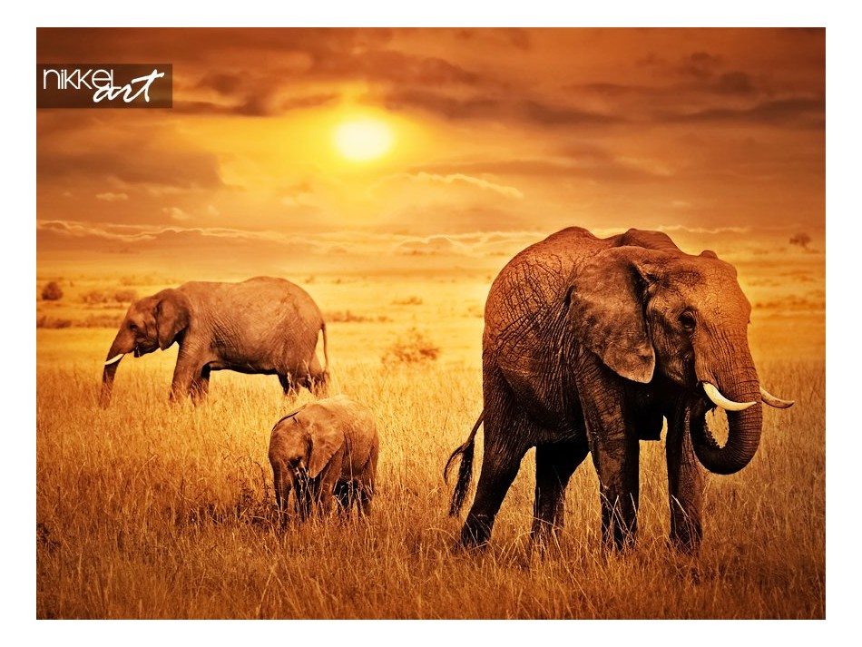 Elephants at Sunset Background