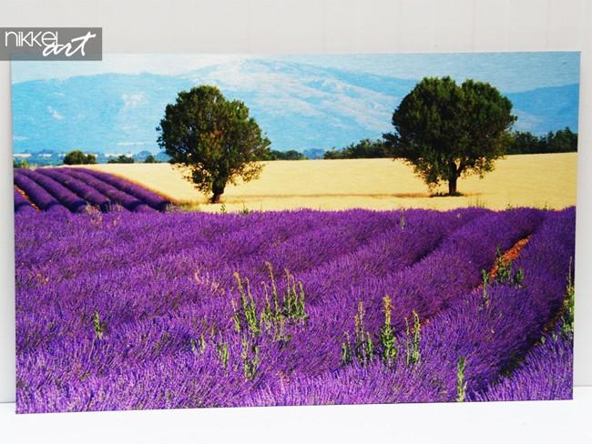 Foto op Aluminium Lavendel