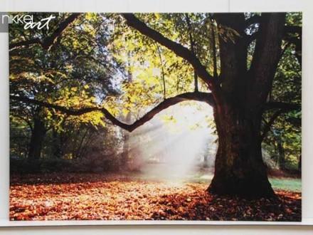 Foto op Canvas Bomen