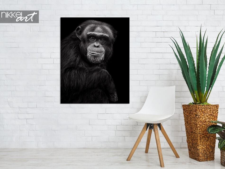Chimpansee op aluminium