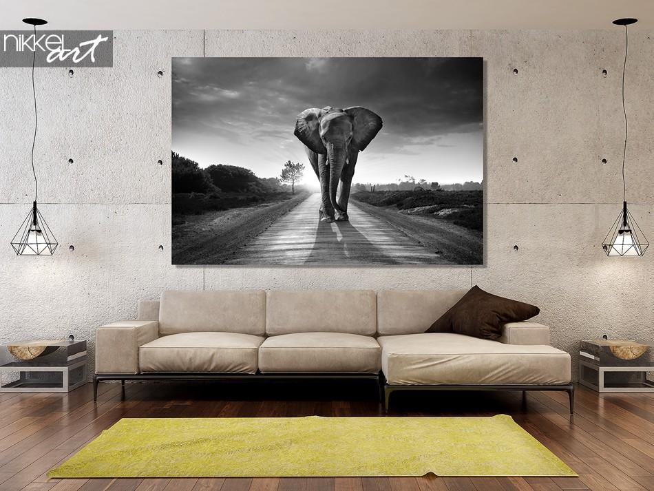 Foto op plexiglas, olifant, zwart-wit