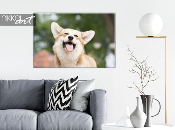 Foto op canvas hond