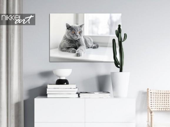 Foto van je kat op plexiglas