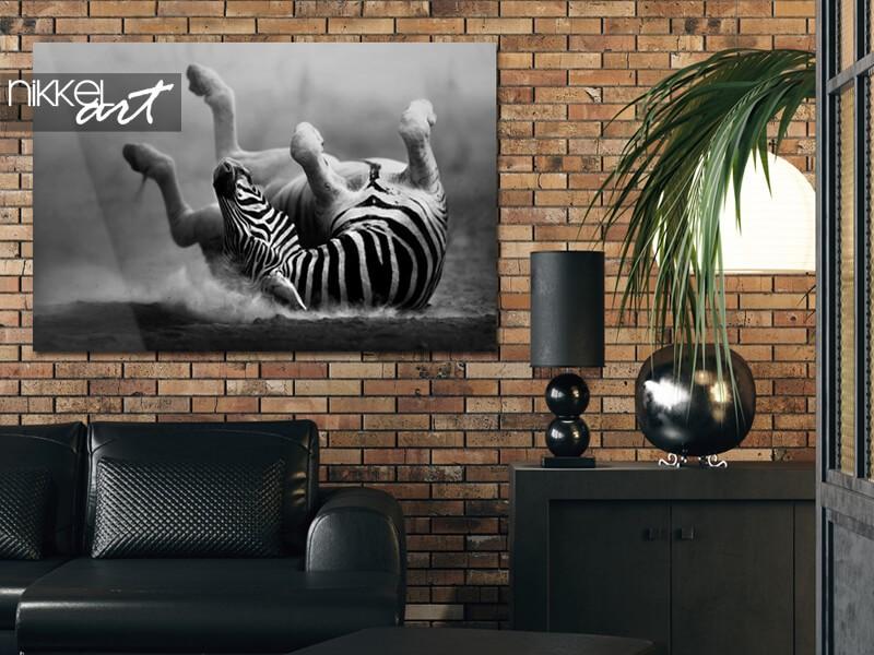 Zebra op plexiglas