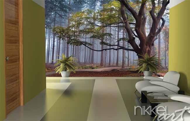 Fotobehang grote beuk in mistig bos
