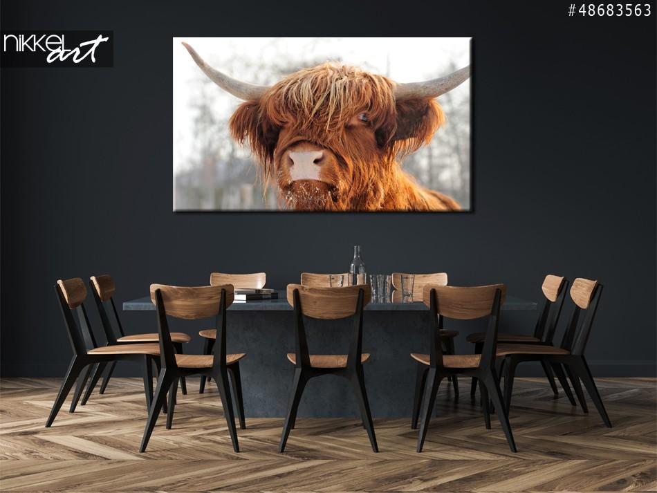 Foto op Plexiglas Schotse runderen