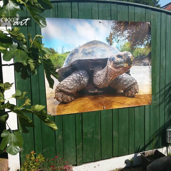 Tuinposter schildpad