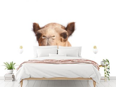 isolated camel head