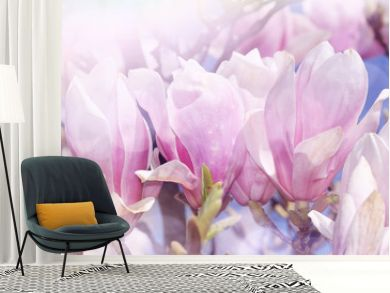 magnolia floral background