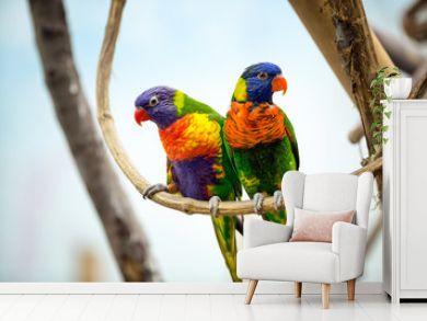 Parrot couple