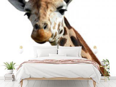 giraffe isolated on white background