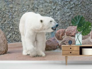 Beautiful polar bear near the stone wall