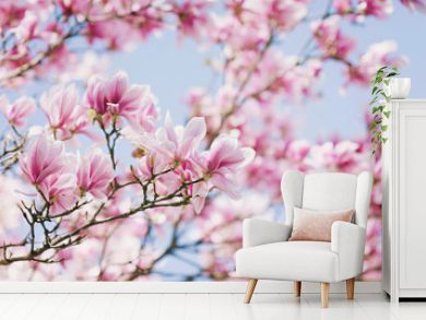 Spring! Blooming Magnolia