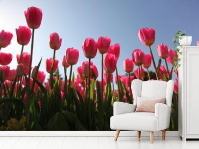 tulip field with sky