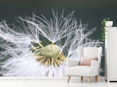 white fluffy dandelion flower in detail
