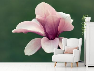 Beautiful magnolia flower