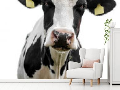 cow on white background