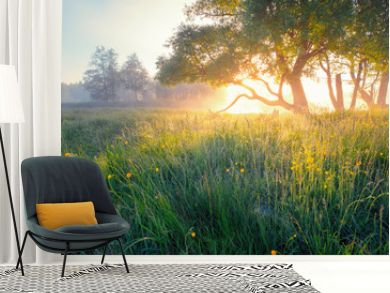 Summer background. Summer nature early in the morning. Colorful mist in morning sunlight over meadow. Sun shines through tree on wild flowers.