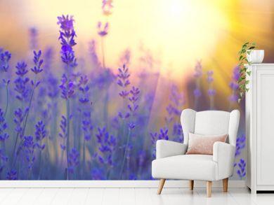 Lavender field, Blooming violet fragrant lavender flowers. Growing lavender swaying on wind over sunset sky, harvest, perfume ingredient, aromatherapy