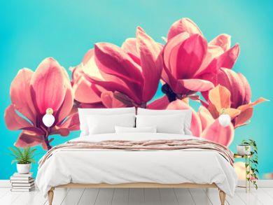 Blossoming magnolia flowers. Springtime.