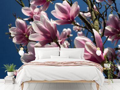 Siebolds magnolia