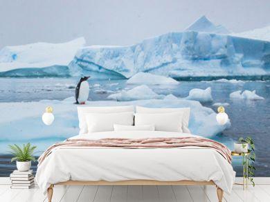 penguin in Antarctica,  wildlife nature, beautiful landscape with icebergs