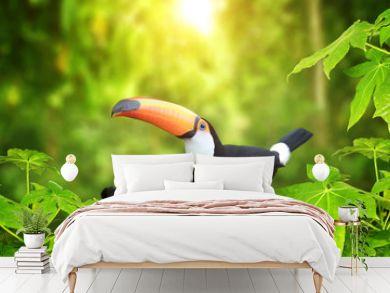 HBeautiful colorful toucan bird