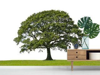 oak tree, symbol of strength