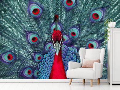 peacock 3