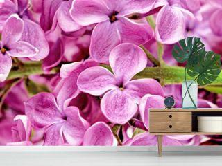 Beautiful Bunch of Lilac close-up