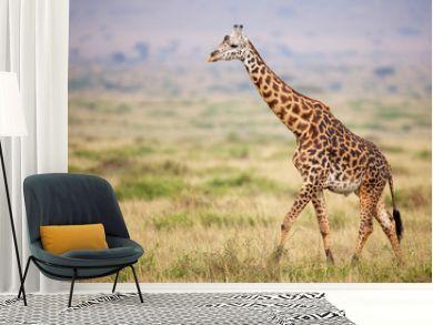 Giraffe walking in Kenya