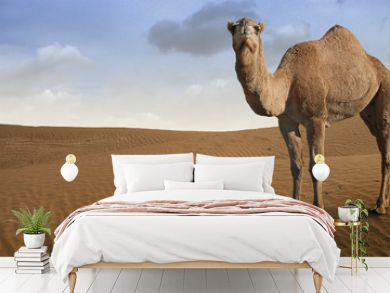 Camel standing in front of the desert.